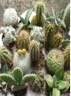 Selection de 20 Cactus