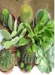 Selection de 8 Cactus
