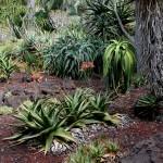 Aloe Garden5