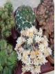 Selection de 6 cactus